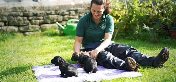 Puppy Parties - socialisation and puppy care advice