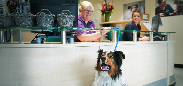 Garston Vets Careers - Submit your CV