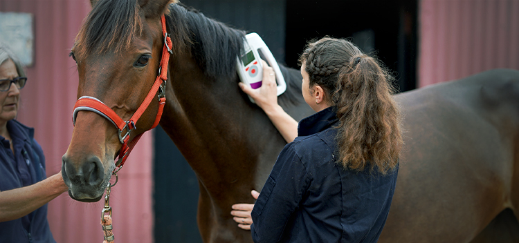 Why your horse needs a passport and microchip