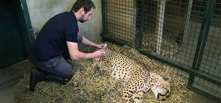 Exotic Vets for Longleat Safari Park in Warminster