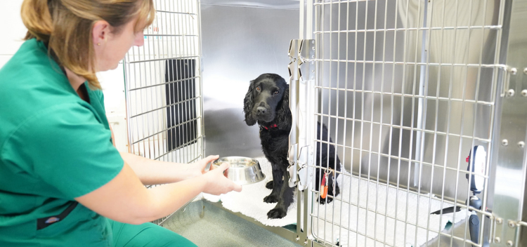 Veterinary facilities for pets in both Somerset & Wiltshire
