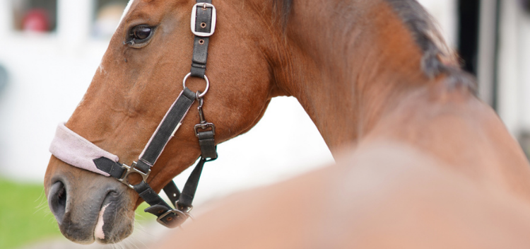 Equine breeding services