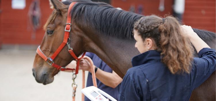 Equine Registration Form