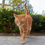 How to keep an arthritic cat comfortable at home