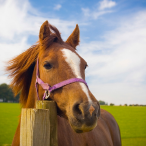 What is a healthy body score for your horse?