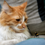 8 bee sting first aid tips for cat owners in Somerset