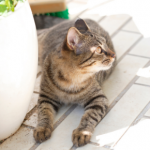 8 summer dangers cat owners in Somerset need to know about
