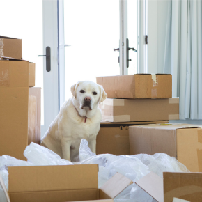 Garston Vets' tips for moving house with your dog