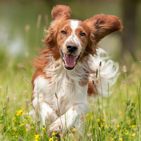 Lyme disease, kennel cough and other summer dog diseases