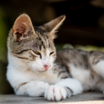 3 important summer disease checks for cats