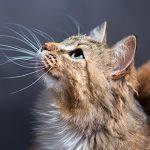 Finding the right cat vet