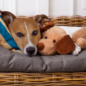 Garston Vets' tips on reducing separation anxiety in dogs