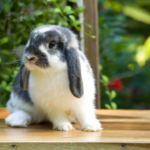 The most important behaviour Wiltshire and Somerset rabbit owners must recognise