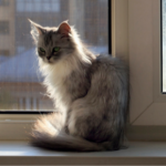 'Pain' behaviours that every cat owner in Wiltshire & Somerset should be able to spot