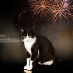 Six actions cat owners across Wiltshire and Somerset should take to prepare for fireworks season