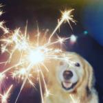 Garston Vets explain how to desensitise your dog to fireworks