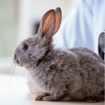 Getting your rabbit pre-winter ready